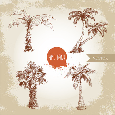 coco: Hand drawn coco palm trees sketch set.Vector illustration on vintage grunge background. Travel and vacation symbols.