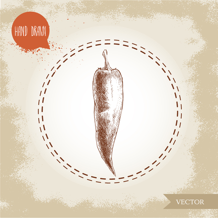 chilli pepper: Hand drawn sketch style chili pepper. Vintage eco food vector illustration. Grunge background.