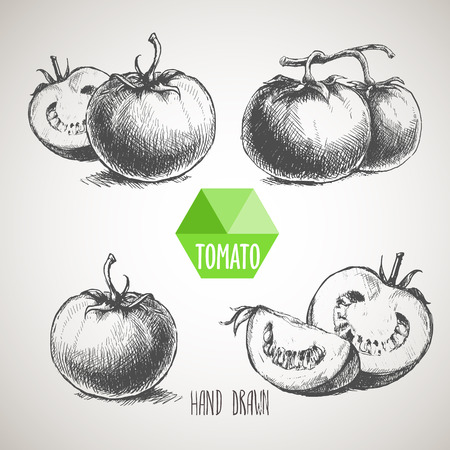 Set of hand drawn tomato. Organic eco food