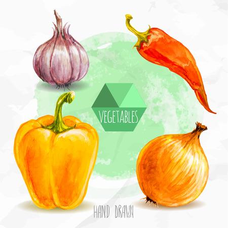 수채화 손으로 야채를 그린 설정합니다. 에코 음식 그림입니다. 수채화 녹색 배경입니다. 마늘, 칠리 페 퍼, 피망, 양파. 뜨겁고 매운.