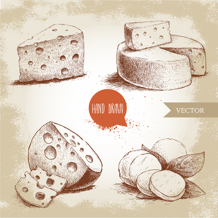 edam: different type of cheese set. Edam, mozzarella cheese with basil leafs, round cheese head, triangle of cheese. organic food illustration. Vintage design. Sketch style.
