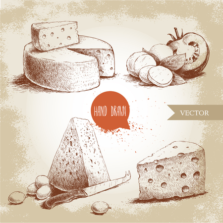 different type of cheese set. Edam, mozzarella cheese with basil leafs and tomato, round cheese head, triangle of cheese. organic food illustration. Vintage design. Sketch style.