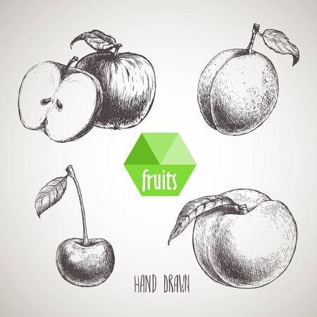 sketch style fruits set. Apple with slice of apple, apricot, cherry and peach. Organic food, farm fresh fruit. Vintage style illustration