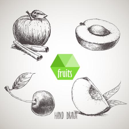 sketch style fruits set. Apple with cinnamon sticks, half of apricot, cherry and quarter of peach. Organic food, farm fresh fruit. Vintage style illustration