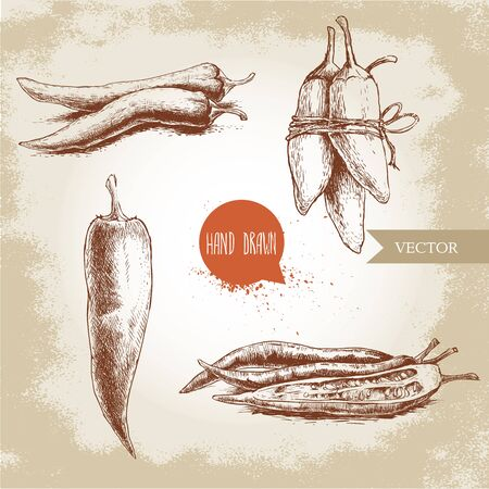 tabasco: sketch style chili peppers set. Vintage eco food illustration. Ripe and sliced peppers. Grunge background.