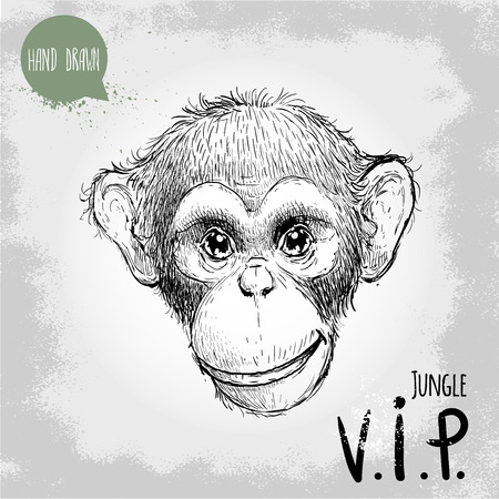very important person: Hand drawn sketch style illustration of monkey face. Jungle VIP (Very Important person). Chinese zodiac sign. Young Chimpanzee. Vector illustration. Illustration