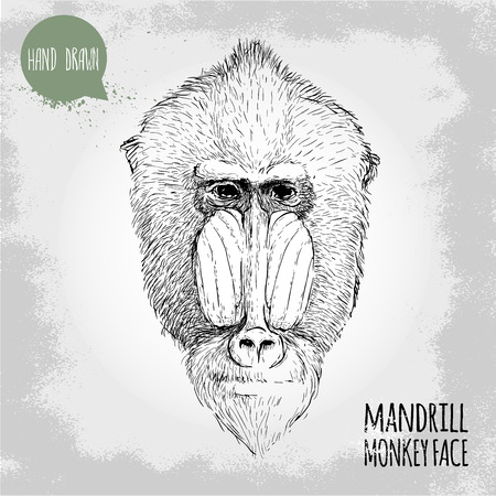 mandrill: Hand drawn sketch style illustration of monkey face. Chinese zodiac sign. Mandrill male face. Dangerous monkey. T-shirt and placard design. Vector illustration. Illustration