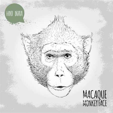 macaque: Hand drawn sketch style illustration of monkey face. Chinese zodiac sign. Macaque male face. T-shirt and placard design. Vector illustration. Illustration