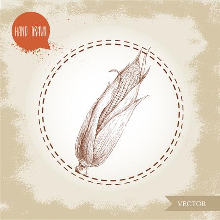 corncob: Hand drawn sketch style corn vegetable. Corncob with leafs. Organic cereal vector illustration. Sweetcorn food.