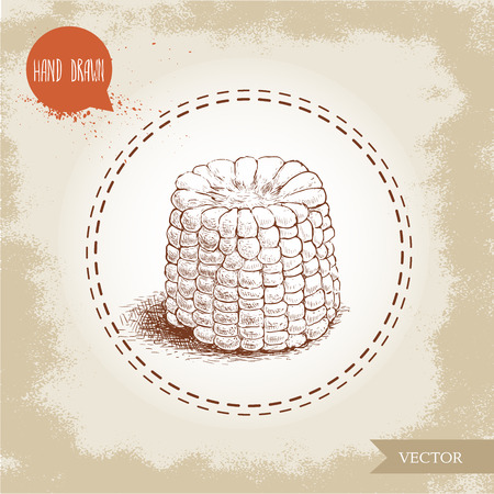 sweetcorn: Hand drawn sketch style corn vegetable. Corncob with leafs. Organic cereal vector illustration. Sweetcorn food.