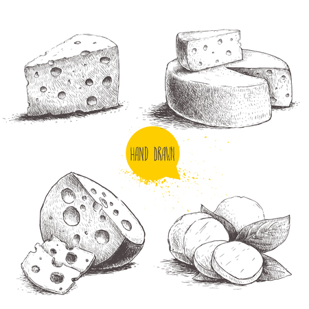 edam: Hand drawn different type of cheese set. Edam, mozzarella cheese with basil leafs, round cheese head, triangle of cheese. Vector organic food illustration. Vintage design.