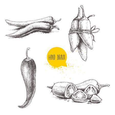 dibujados a mano chiles estilo del bosquejo fijó. ilustración vectorial alimentos eco de la vendimia. pimientos maduros y en rodajas. Aislado en el fondo blanco.