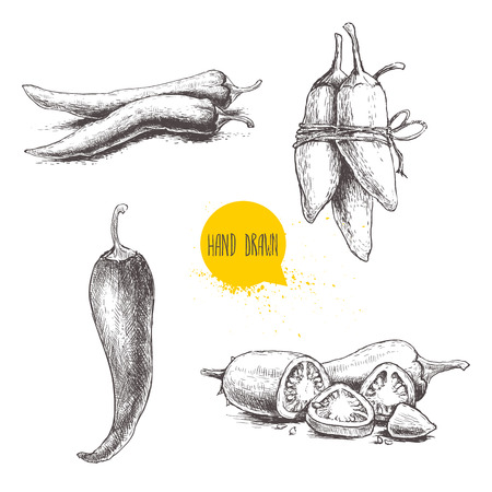 chilli pepper: Hand drawn sketch style chili peppers set. Vintage eco food vector illustration. Ripe and sliced peppers. Isolated on white background.