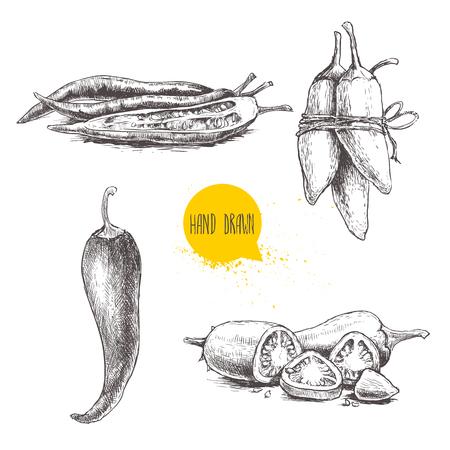 Hand getrokken schets stijl chili peppers in te stellen. Eco food vector illustratie. Rijpe en gesneden paprika. Geïsoleerd op een witte achtergrond.