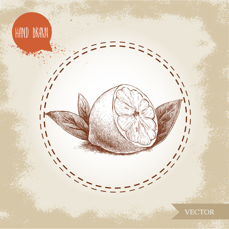 scratchboard: Hand drawn sketch style lemon fruit with leafs. Retro organic food vector illustration.