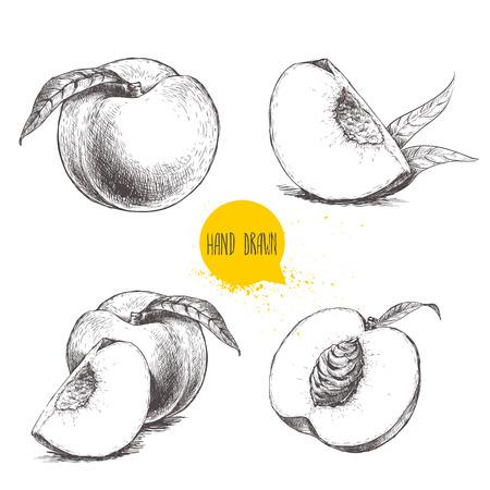 손으로 그린 스케치 스타일 복숭아 과일 세트. 빈티지 에코 음식 벡터 일러스트 레이 션. 잘 익은 복숭아, 복숭아 조각. 흰색 배경