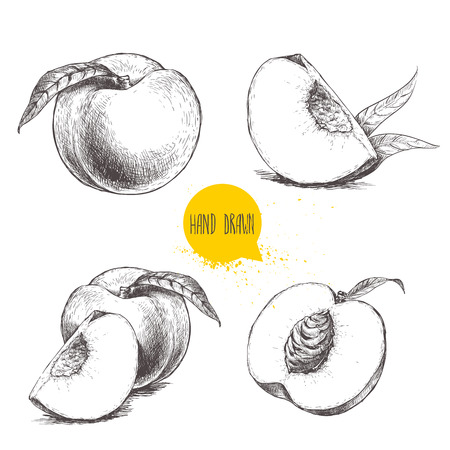 Hand drawn sketch style peach fruit set. Vintage eco food vector illustration. Ripe peach, peach slices. White background