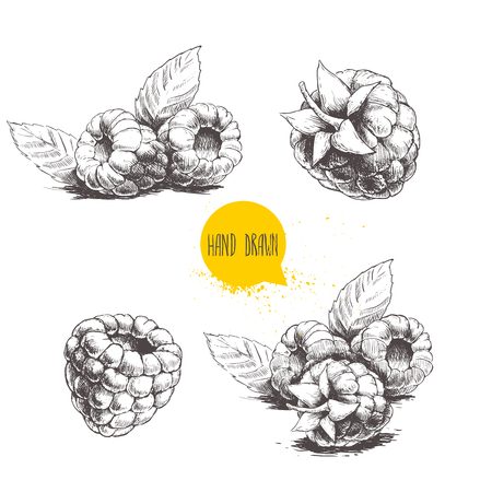 Ensemble de framboises dessiné à la main isolé sur fond blanc. Rétro sketch style vecteur eco food illustration Vecteurs