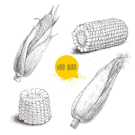 손 옥수수 야채의 스케치 스타일 세트를 그려. 잎과 옥수수 속대. 유기농 시리얼 벡터 일러스트 레이 션. 단 옥수수 음식입니다.