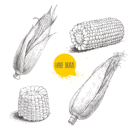 corncob: Hand drawn sketch style set of corn vegetable. Corncob with leafs. Organic cereal vector illustration. Sweetcorn food.