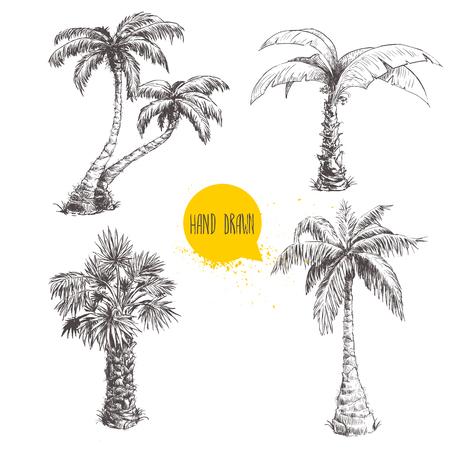 single leaf: Hand drawn palm trees sketch set. Illustration