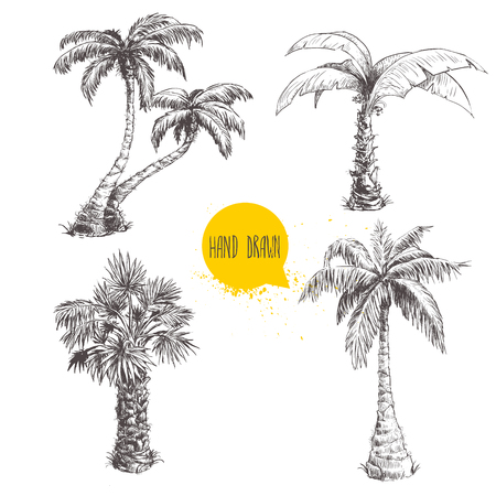 Hand drawn palm trees sketch set. Stock Illustratie