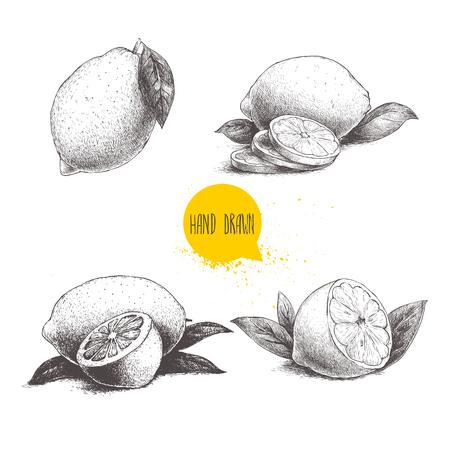 手描きスケッチ スタイル セットとレモン フルーツの葉し、レモンをスライスします。レトロなベクター イラストです。