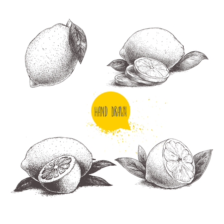 pulp: Hand drawn sketch style set of lemon fruit with leafs and sliced lemon. Retro vector illustration.