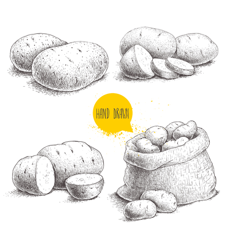 Hand drawn sketch style set illustration of ripe potatoes. Eco food vintage vector illustration