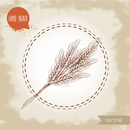 Hand drawn sketch style illustration of wheat sheaf. Bakery and fertility symbol. Illustration