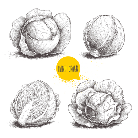Hand drawn sketch style set of cabbages. Cabbage with leafs.