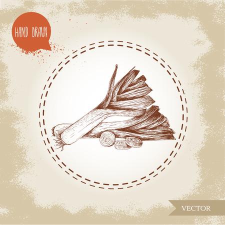 leek: Hand drawn sketch style fresh leeks with sliced pieces of leek . Illustration