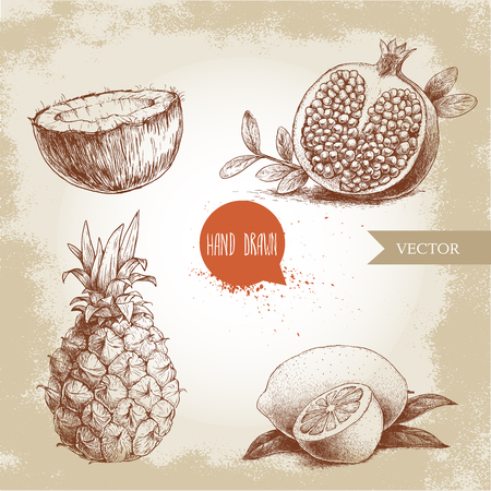 exotic fruit: Hand drawn sketch style tropical fruits set.