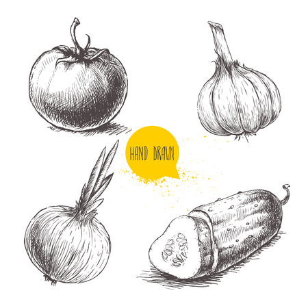 Hand drawn sketch style vegetables set. Tomato, onion, sliced cucumber and garlic.