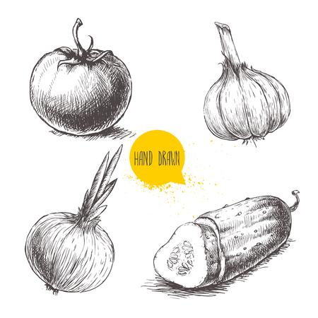 Disegnati a mano disegno di verdure in stile schizzo. Pomodoro, cipolla, cetrioli affettati e aglio.