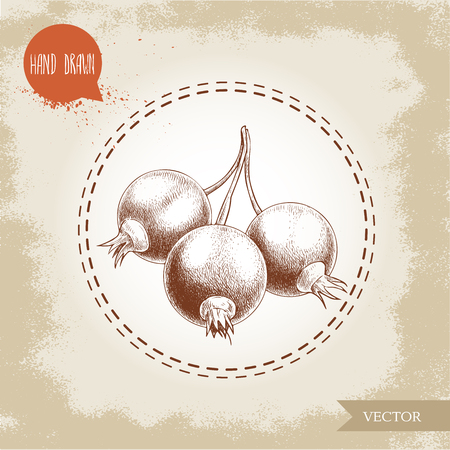 Hand drawn sketch style illustration of black currant branch. Forest berry vintage vector illustration. Ilustracja