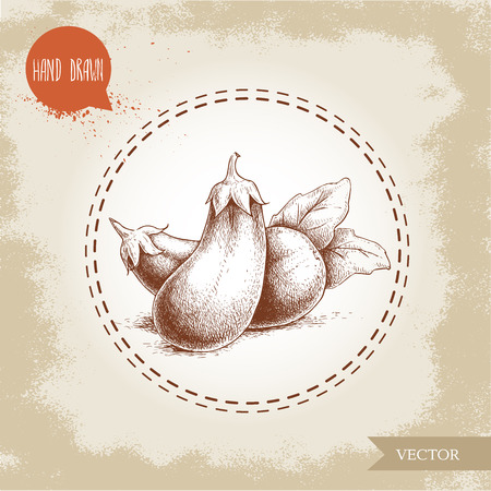 Hand drawn sketch style eggplants with leaves illustration. Vector food ecological artwork. Ilustrace