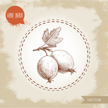 Hand drawn sketch style illustration of gooseberries with leaf. Ilustrace