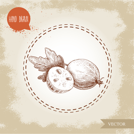 Hand drawn sketch style illustration of gooseberry and half of gooseberry with seed.