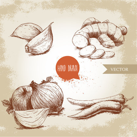 Hand drawn sketch style illustration of different spices. Cloves of garlic, ginger root, onions and chili peppers. Illustration
