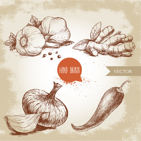 Hand drawn sketch style illustration of different spices. Garlics with black peppers, ginger root, onion and red hot chili pepper.
