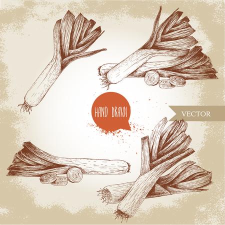 leek: Hand drawn sketch style fresh leeks set. Fresh leek and slices of leek.Vintage illustration of healthy fresh organic food. Illustration