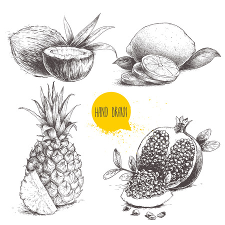 Hand drawn sketch style tropical fruits set isolated on white background. Slice of lemon with leaf, half of coconut, pineapple and pomegranates with seeds. Tropic food drawing.