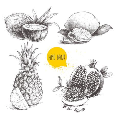 Hand getrokken tropische vruchten van de schetsstijl geplaatst die op witte achtergrond worden geïsoleerd. Plakje citroen met blad, de helft van de kokosnoot, ananas en granaatappels met zaden. Tropic voedseltekening. Stock Illustratie