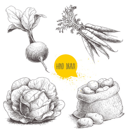 手描きスケッチ スタイルの野菜セット。キャベツ、ビートの根、葉、ジャガイモとニンジンの束が付いている袋。ファーム生鮮食品は、白い背景で隔離。