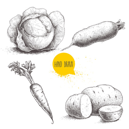 Hand drawn sketch style vegetables set. Cabbage, beet root, potatoes and carrot with leafs. Farm fresh food isolated on white background.