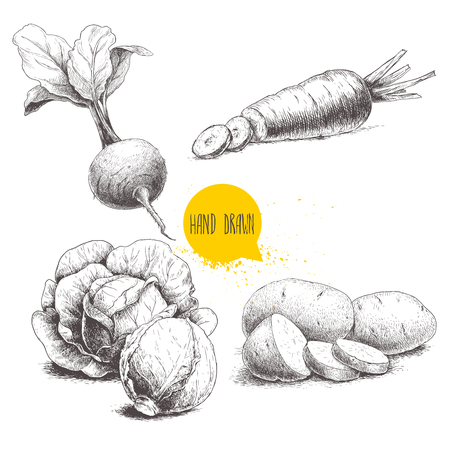Hand drawn sketch style vegetables set. Cabbages, beet root with leafs, potatoes and sliced carrot. Farm fresh food isolated on white background.