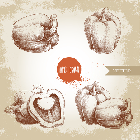 Hand drawn illustration set of bell peppers . Sketch style vector capsicums. Health eco food fresh farm drawing. Ilustrace