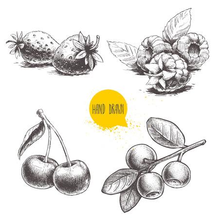 Hand gezeichnete Skizzenartbeeren eingestellt. Himbeere mit Blättern, Erdbeeren, Kirsche und Blaubeerniederlassung. Gesunde Frucht- und Beerenvektor Retro- Illustration auf weißem Hintergrund.