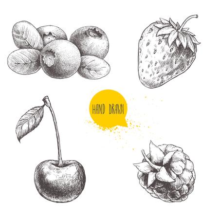 Le bacche disegnate a mano di stile di schizzo hanno messo isolato su fondo bianco. Lampone, fragola, ciliegia e mirtillo. Illustrazione vettoriale di cibo sano.